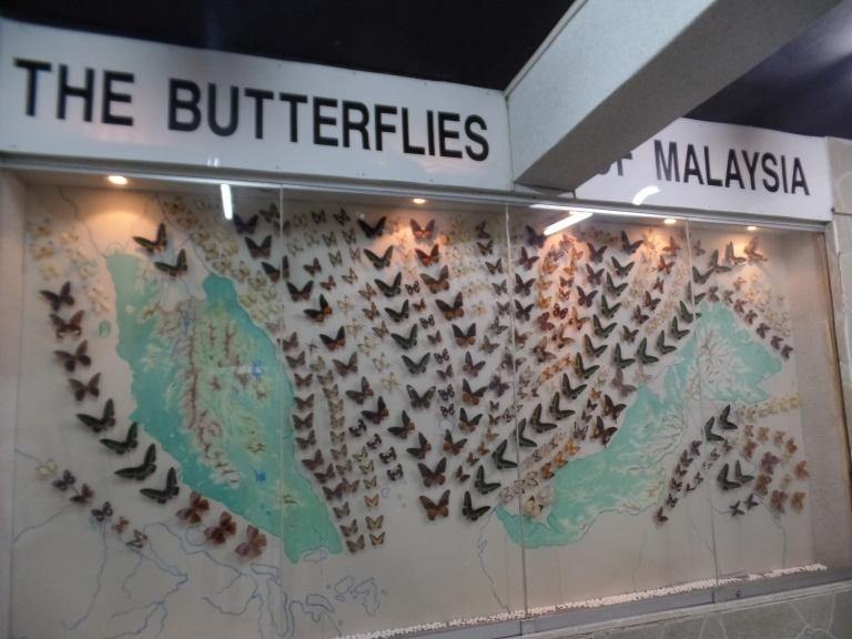 Fluturii morti ai Malaeziei