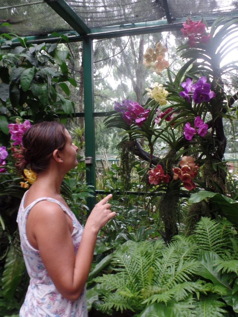 Orhidee peste tot
